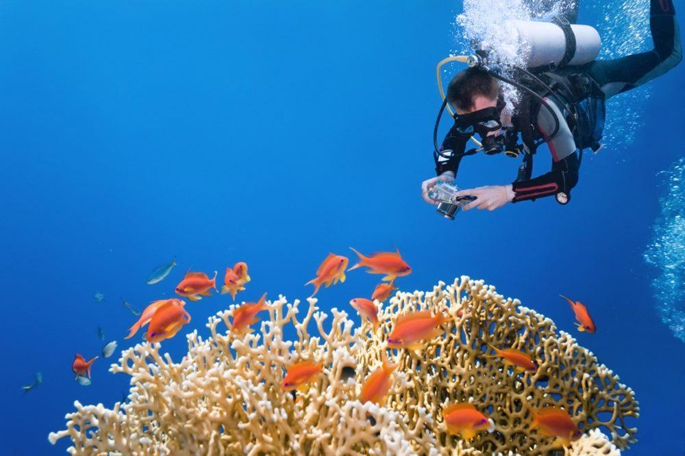 Fotografi Underwater