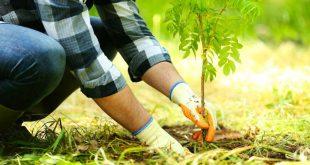 perintah rasulullah untuk menanam